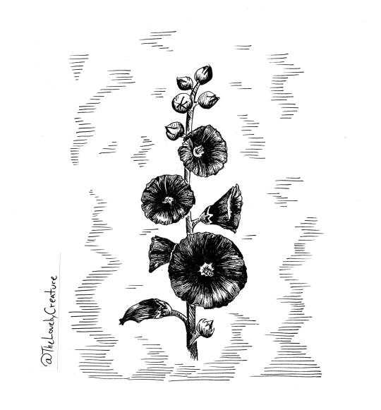 tegning af sort stokrose